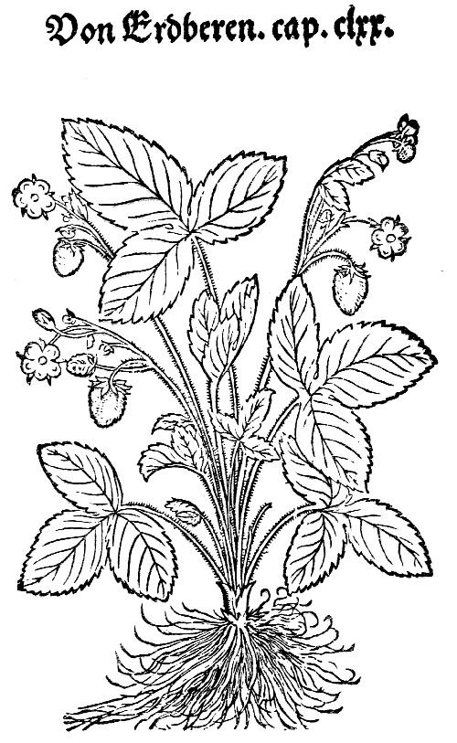 Arber Herbals Gutenburg